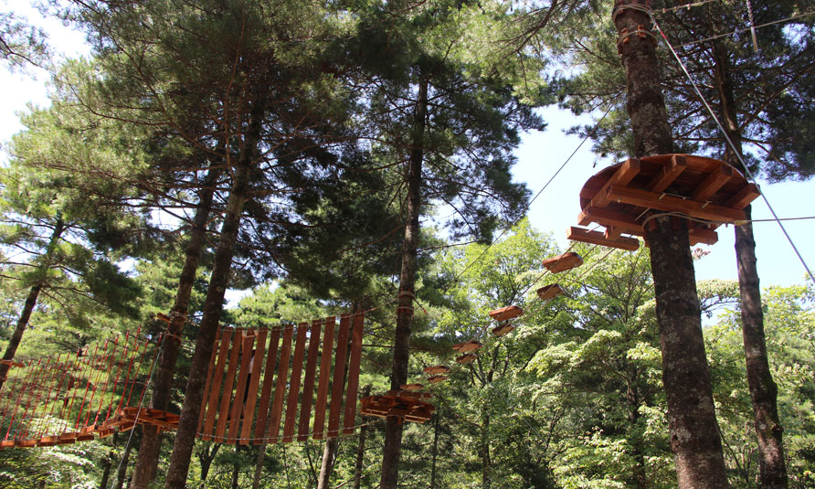 Tree Top Adventure Park, tree top challenge, treetop challenge, treetop ropes course